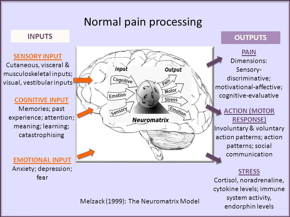 Reported pain intensity correlates with increased limbic activity during pain processing i.e.
