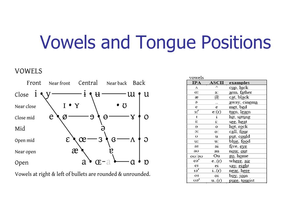 Vowels and Tongue Positions