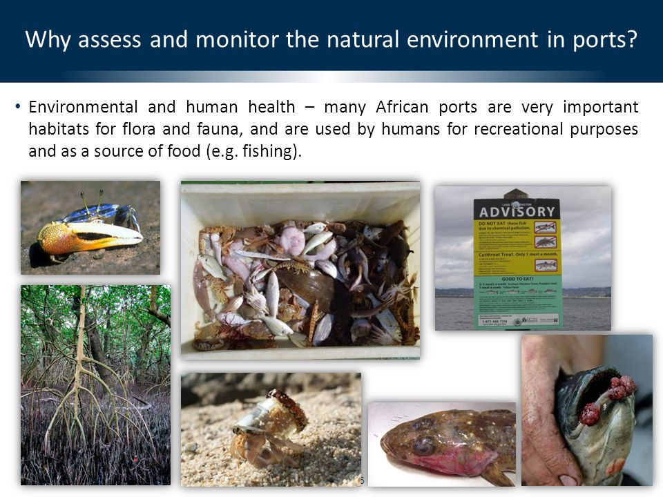 © CSIR 2010Slide 6 Environmental and human health – many African ports are very important habitats for flora and fauna, and are used by humans for rec