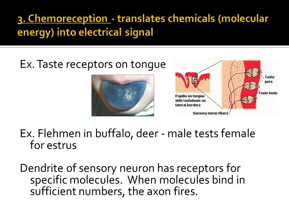 Ex. Taste receptors on tongue Ex.