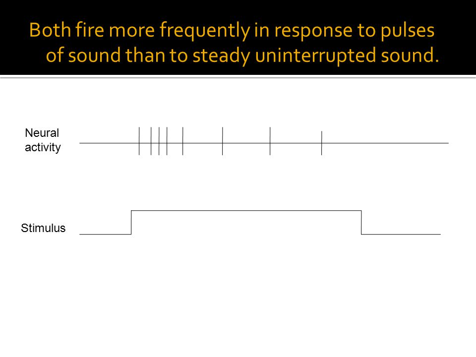 Both fire more frequently in response to pulses of sound than to steady uninterrupted sound.
