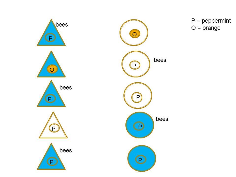P O bees P P P P P P P O P = peppermint O = orange bees