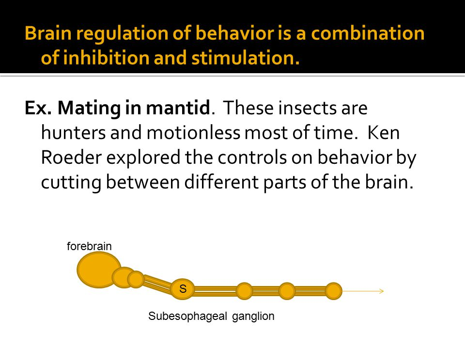 Brain regulation of behavior is a combination of inhibition and stimulation.