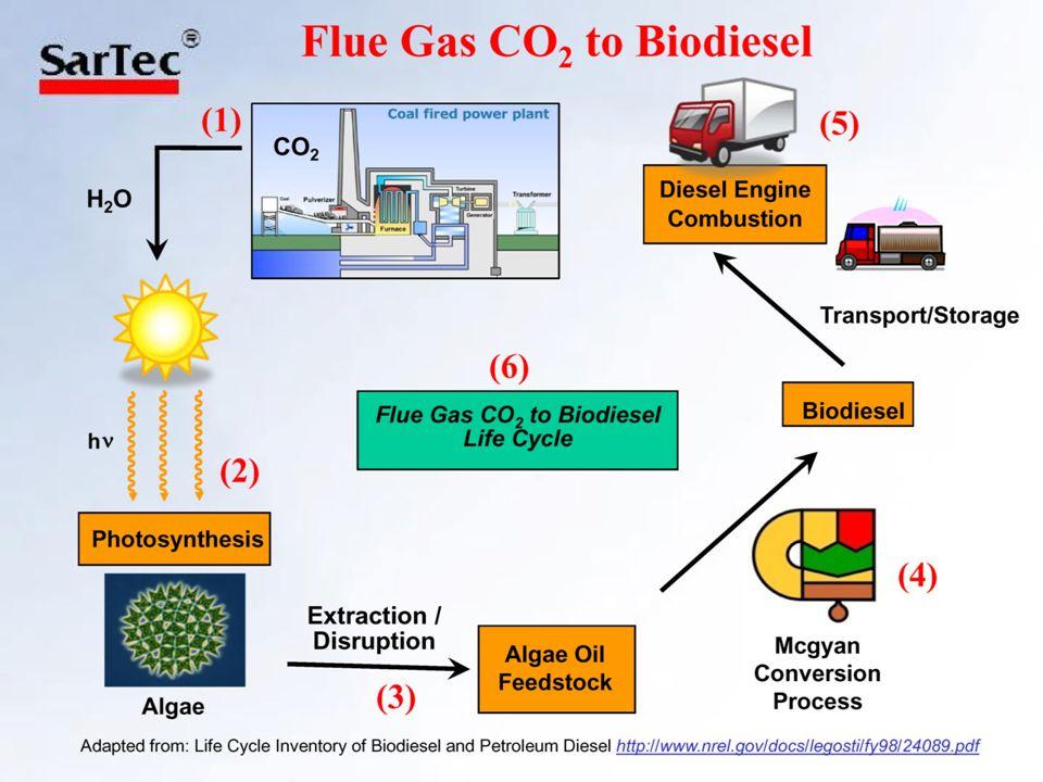 Establishment of Algae Cultures