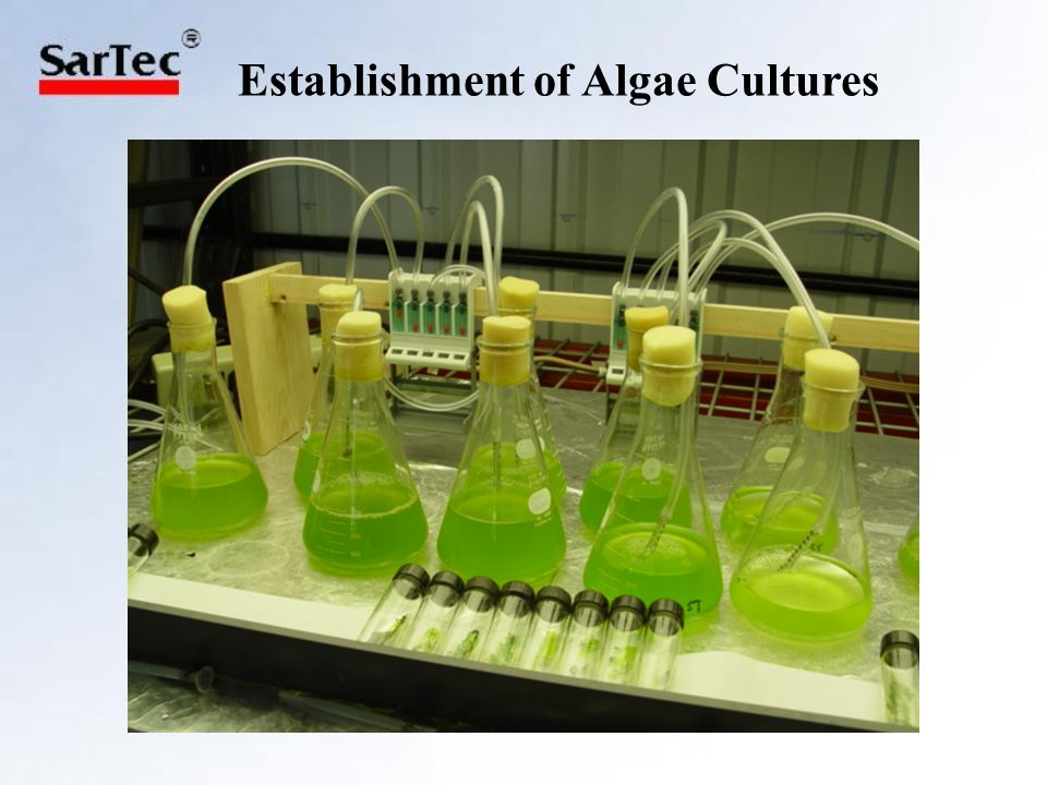 Harvesting Algae Primarily harvested by centrifugation followed by dehydration and pulverizing Electrolytic flocculation tested, found effective at separating algae cells from liquid medium Time-consuming process Electrolytic flocculation faster than centrifuge