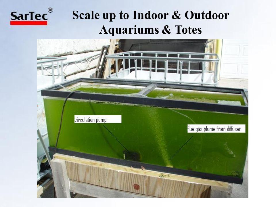 Aquarium (50 gal) and Tote (80 gal)