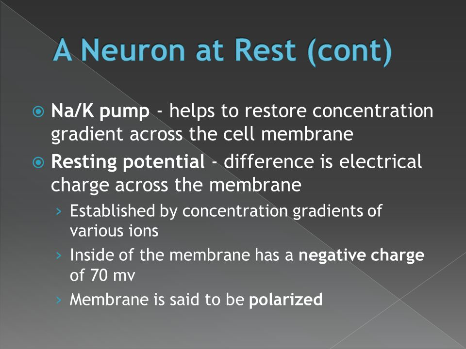  Na/K pump - helps to restore concentration gradient across the cell membrane  Resting potential - difference is electrical charge across the membra