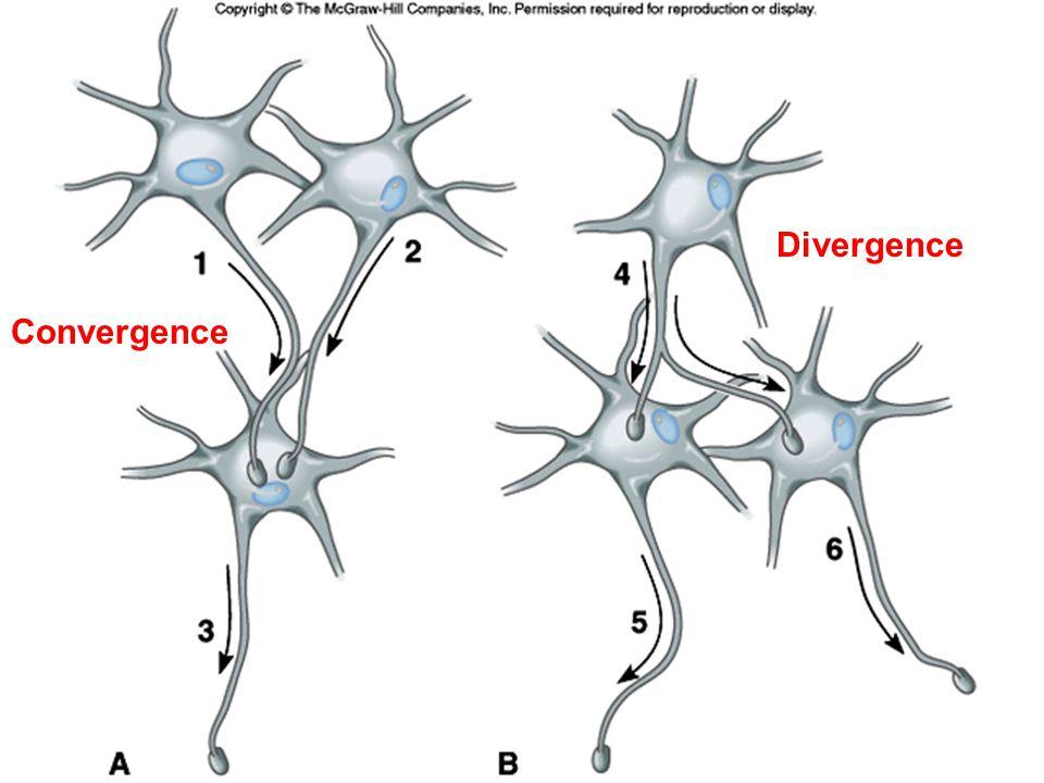 Convergence Divergence