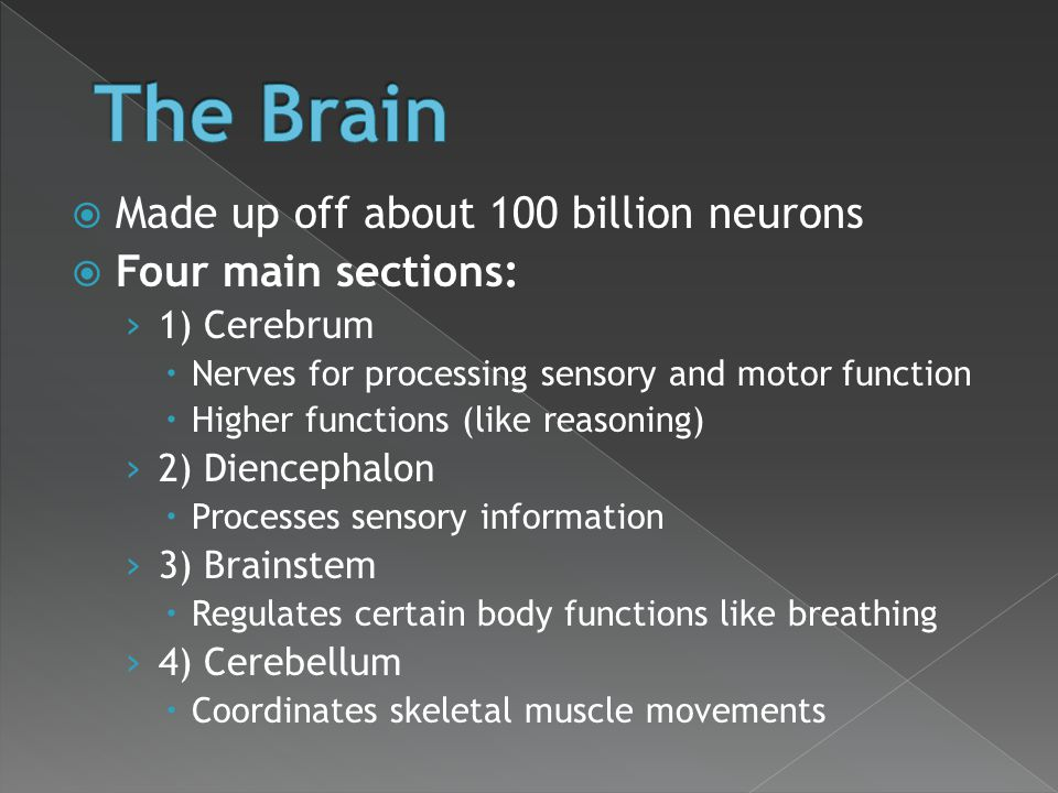  Made up off about 100 billion neurons  Four main sections: › 1) Cerebrum  Nerves for processing sensory and motor function  Higher functions (lik