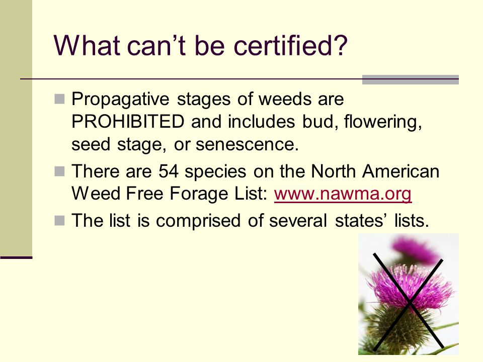 What can't be certified? Propagative stages of weeds are PROHIBITED and includes bud, flowering, seed stage, or senescence. There are 54 species on th