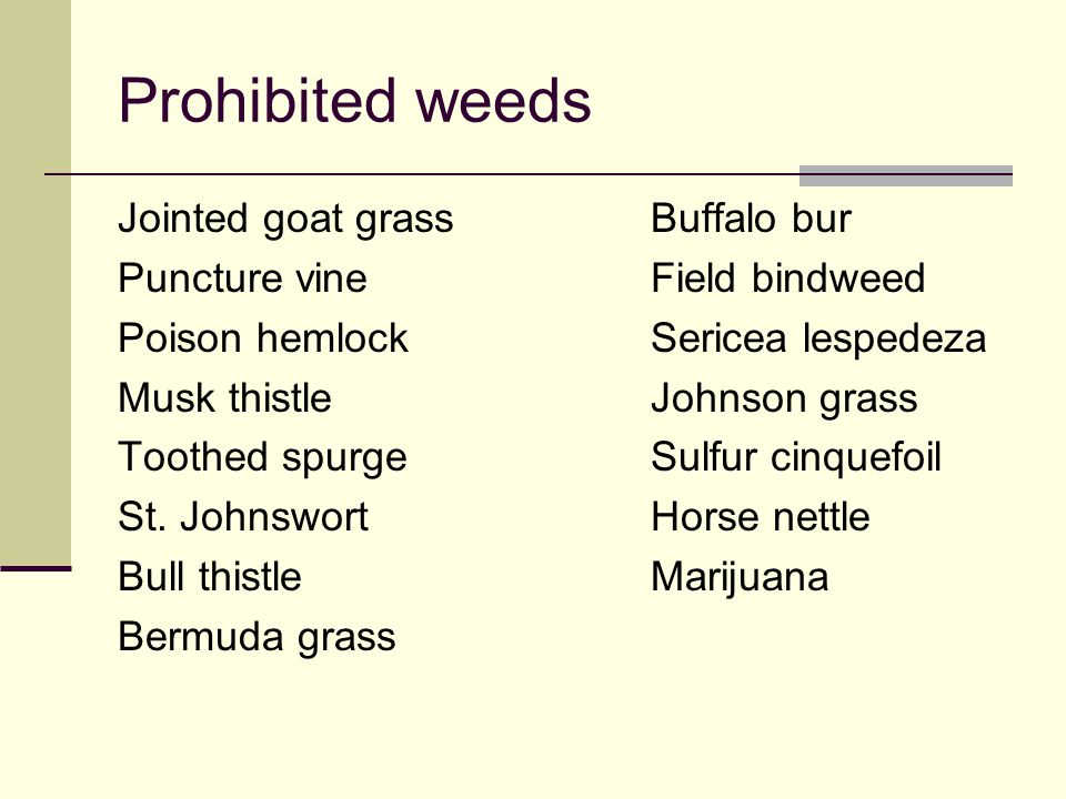 Prohibited weeds Jointed goat grassBuffalo bur Puncture vineField bindweed Poison hemlockSericea lespedeza Musk thistleJohnson grass Toothed spurgeSul
