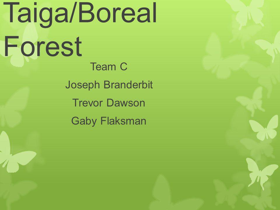 Taiga/Boreal Forest Team C Joseph Branderbit Trevor Dawson Gaby Flaksman