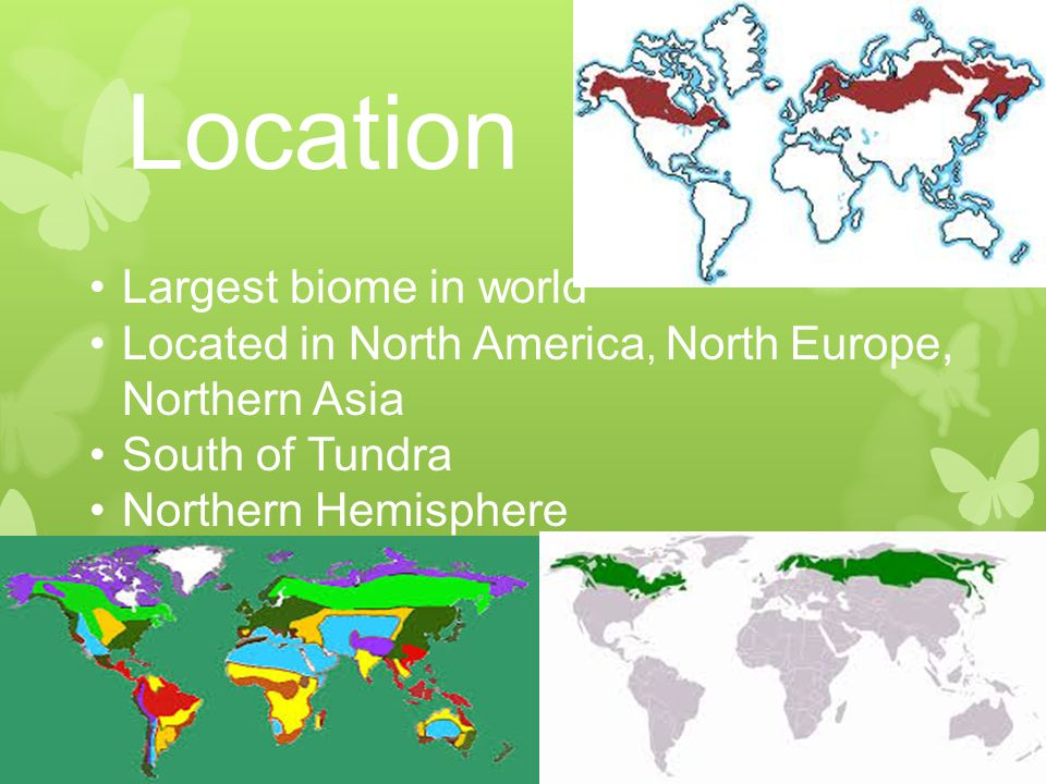 Location Largest biome in world Located in North America, North Europe, Northern Asia South of Tundra Northern Hemisphere