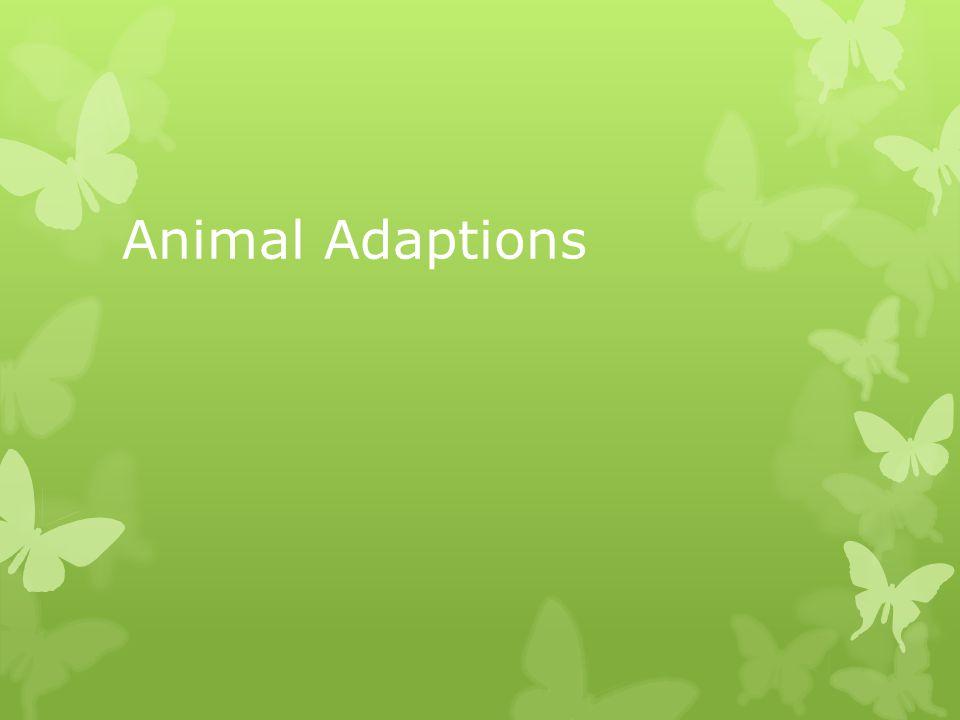 Animal Adaptions