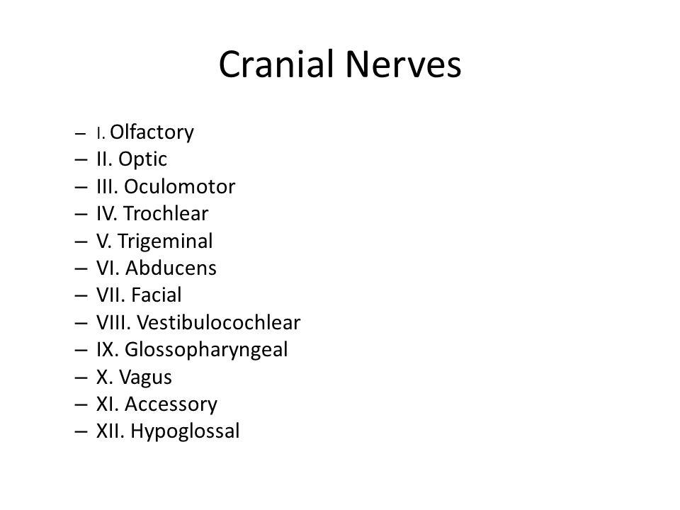 Cranial Nerves – I. Olfactory – II. Optic – III. Oculomotor – IV. Trochlear – V. Trigeminal – VI. Abducens – VII. Facial – VIII. Vestibulocochlear – I