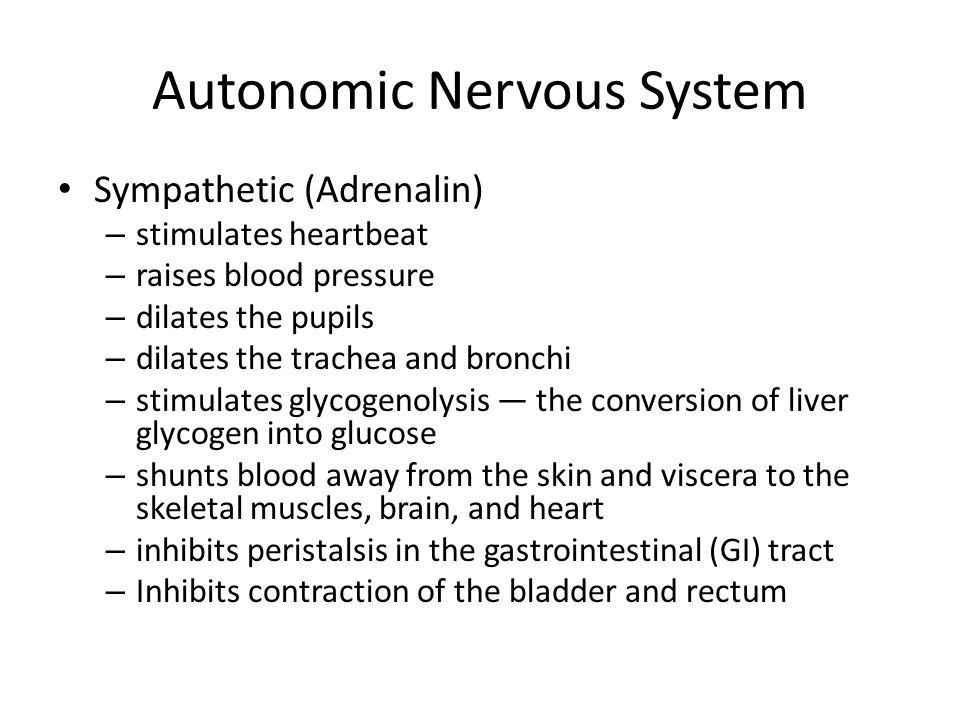 Autonomic Nervous System Sympathetic (Adrenalin) – stimulates heartbeat – raises blood pressure – dilates the pupils – dilates the trachea and bronchi