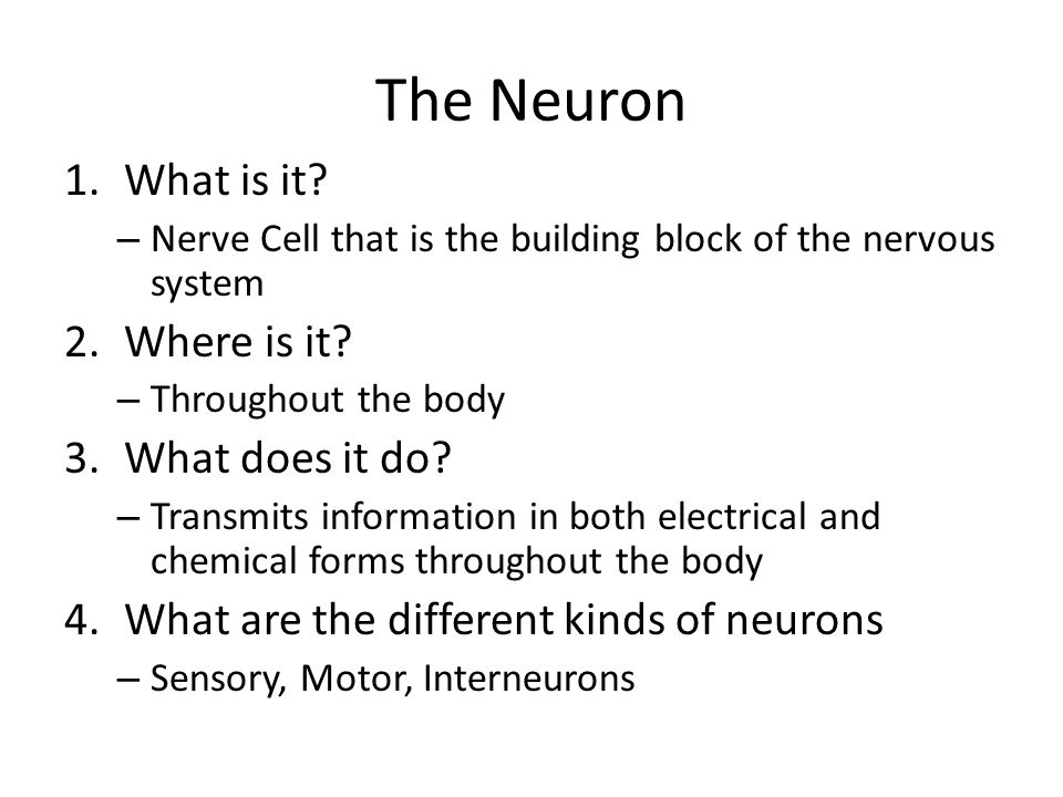 The Neuron 5.What does a neuron look like?