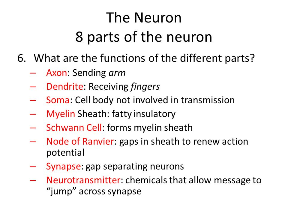 The Neuron 8 parts of the neuron 6.What are the functions of the different parts? – Axon: Sending arm – Dendrite: Receiving fingers – Soma: Cell body