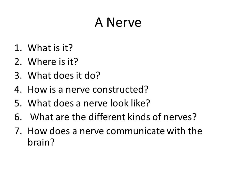 A Nerve 1.What is it? 2.Where is it? 3.What does it do? 4.How is a nerve constructed? 5.What does a nerve look like? 6. What are the different kinds o