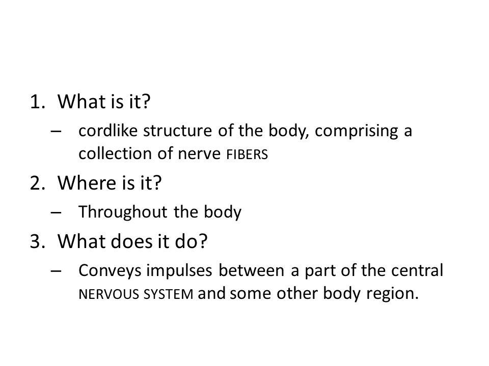 A Nerve 4.How is a nerve constructed.– Like a muscle: – an outer covering: the epineurium.