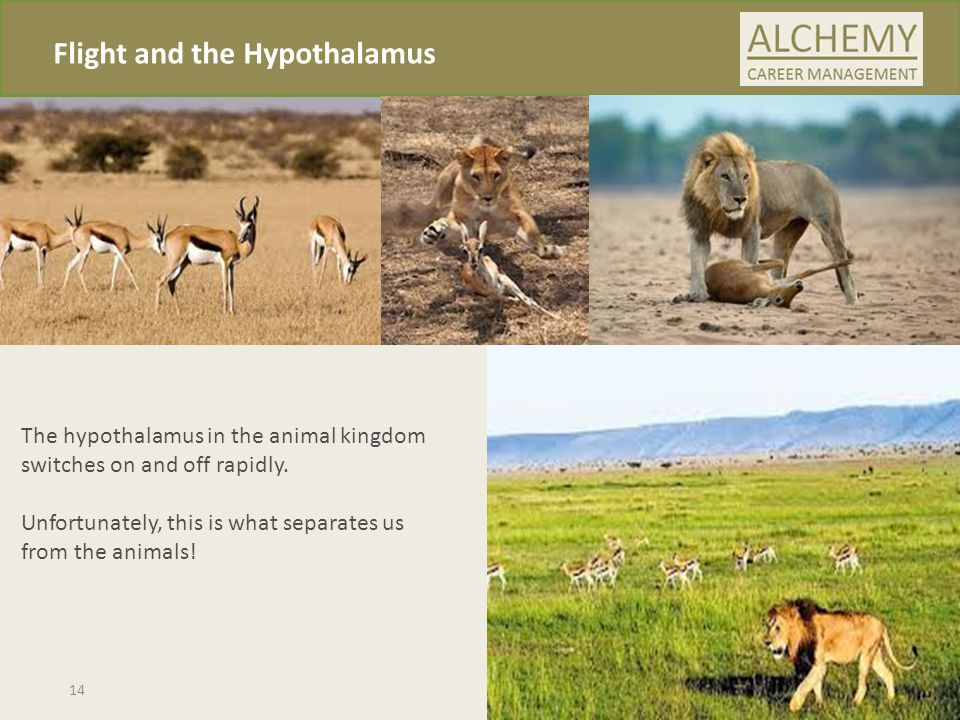 Flight and the Hypothalamus The hypothalamus in the animal kingdom switches on and off rapidly.