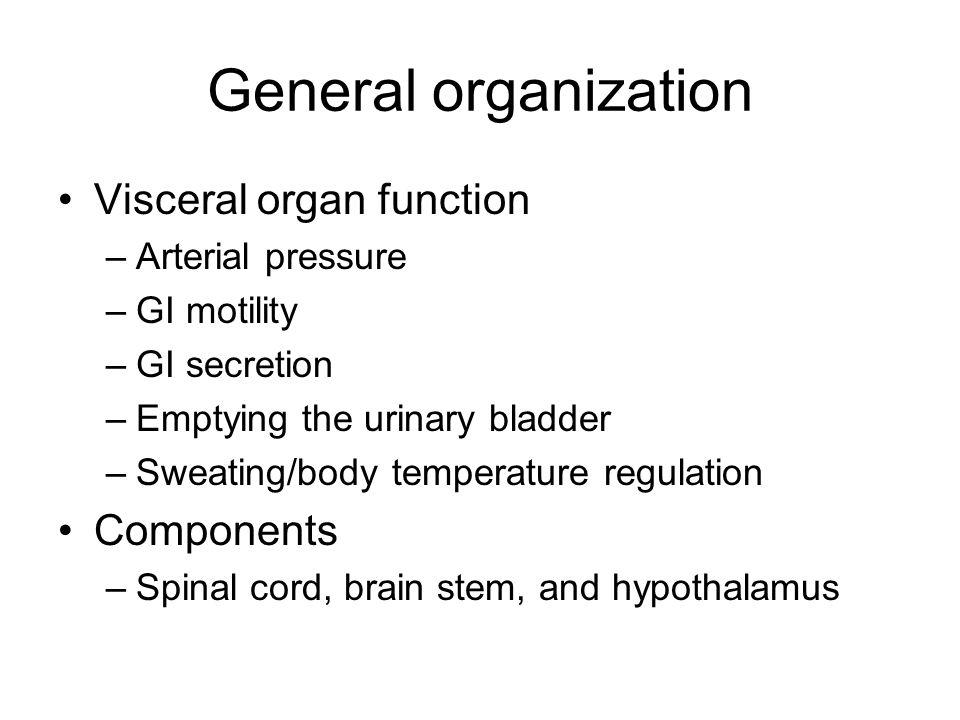 General organization Visceral organ function –Arterial pressure –GI motility –GI secretion –Emptying the urinary bladder –Sweating/body temperature re