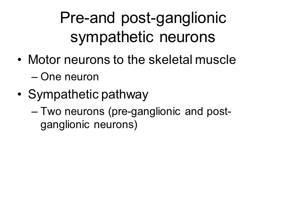 Pre-and post-ganglionic sympathetic neurons Motor neurons to the skeletal muscle –One neuron Sympathetic pathway –Two neurons (pre-ganglionic and post