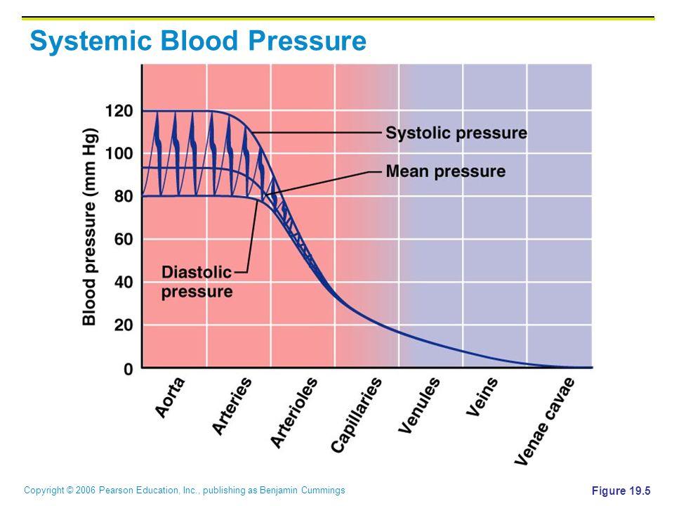 Copyright © 2006 Pearson Education, Inc., publishing as Benjamin Cummings Systemic Blood Pressure Figure 19.5