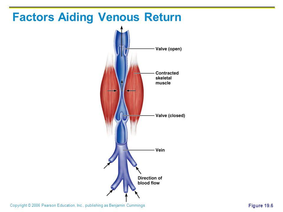 Copyright © 2006 Pearson Education, Inc., publishing as Benjamin Cummings Factors Aiding Venous Return Figure 19.6