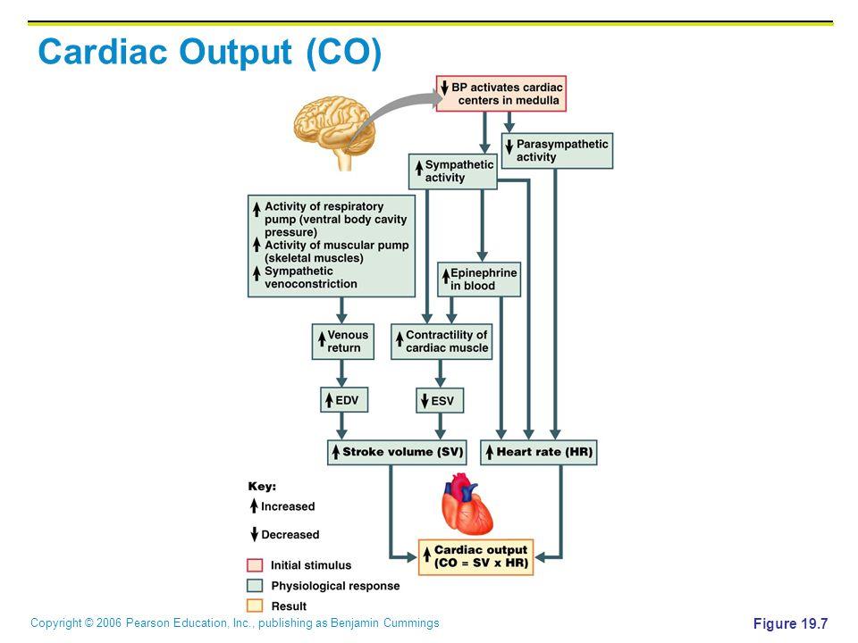 Copyright © 2006 Pearson Education, Inc., publishing as Benjamin Cummings Cardiac Output (CO) Figure 19.7