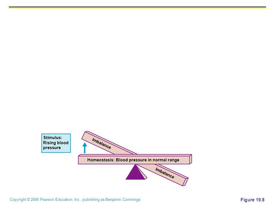 Copyright © 2006 Pearson Education, Inc., publishing as Benjamin Cummings Stimulus: Rising blood pressure Homeostasis: Blood pressure in normal range Imbalance Figure 19.8