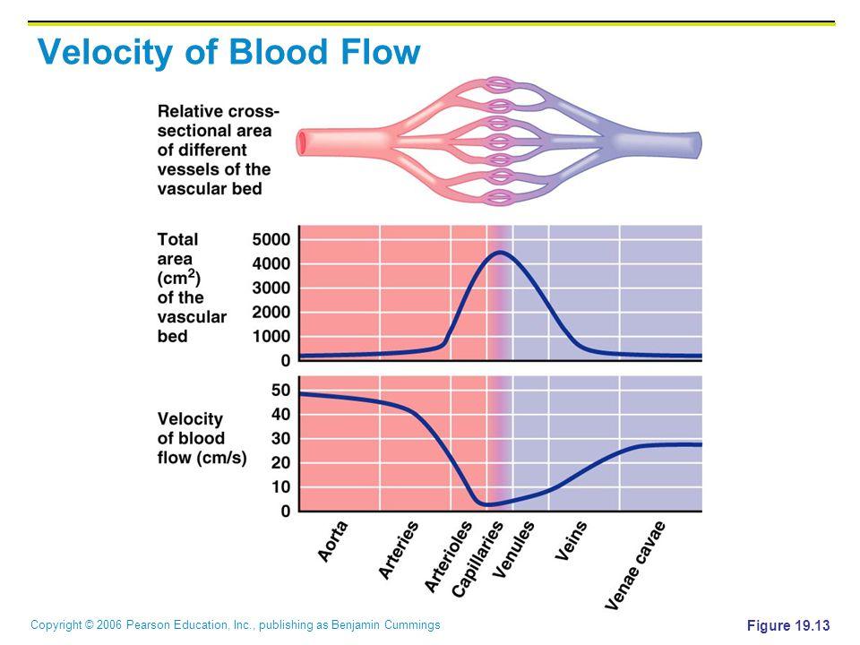 Copyright © 2006 Pearson Education, Inc., publishing as Benjamin Cummings Velocity of Blood Flow Figure 19.13