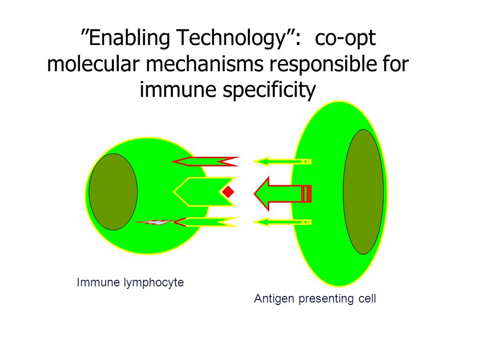 Enabling Technology : co-opt molecular mechanisms responsible for immune specificity Immune lymphocyte Antigen presenting cell
