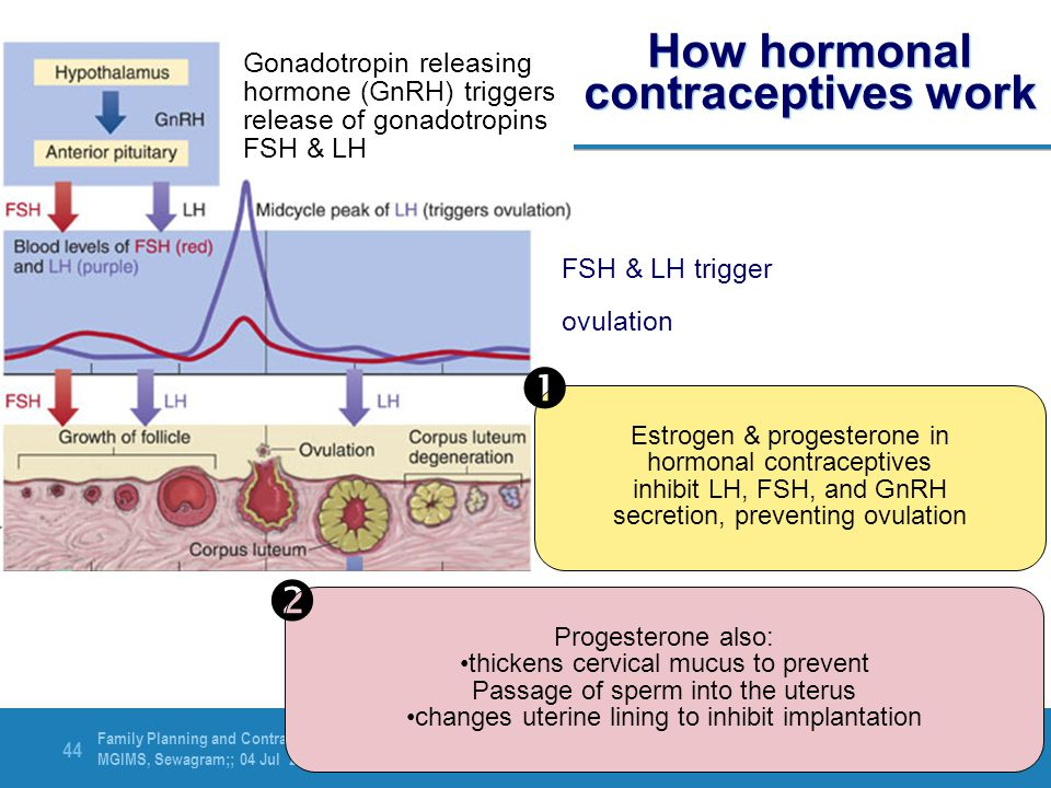 Family Planning and Contraception MGIMS, Sewagram;; 04 Jul 2012 44 How hormonal contraceptives work FSH & LH trigger ovulation Gonadotropin releasing