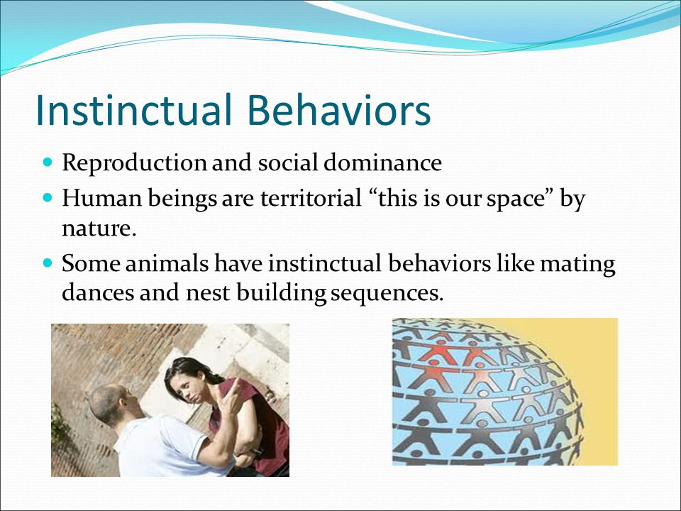 """Instinctual Behaviors Reproduction and social dominance Human beings are territorial """"this is our space"""" by nature. Some animals have instinctual beha"""