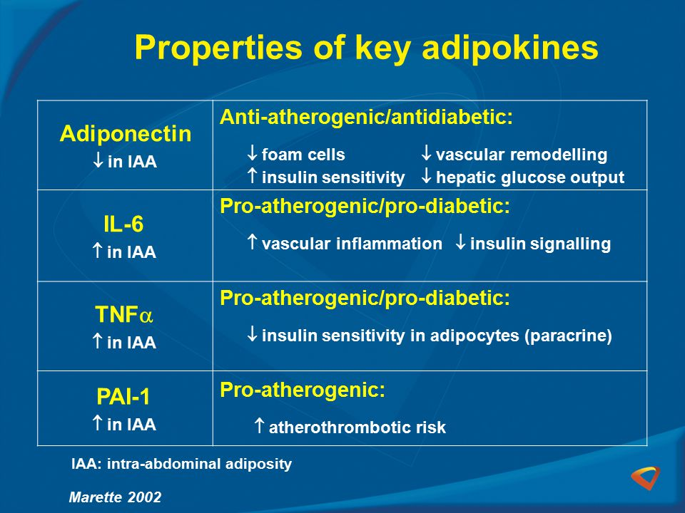 Adiponectin  in IAA Anti-atherogenic/antidiabetic:  foam cells  vascular remodelling  insulin sensitivity  hepatic glucose output IL-6  in IAA Pro-atherogenic/pro-diabetic:  vascular inflammation  insulin signalling TNF   in IAA Pro-atherogenic/pro-diabetic:  insulin sensitivity in adipocytes (paracrine) PAI-1  in IAA Pro-atherogenic:  atherothrombotic risk Properties of key adipokines IAA: intra-abdominal adiposity Marette 2002