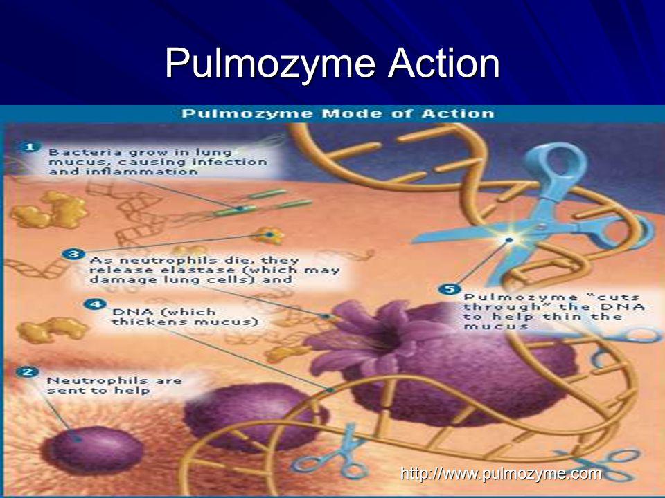 Pulmozyme Action http://www.pulmozyme.com
