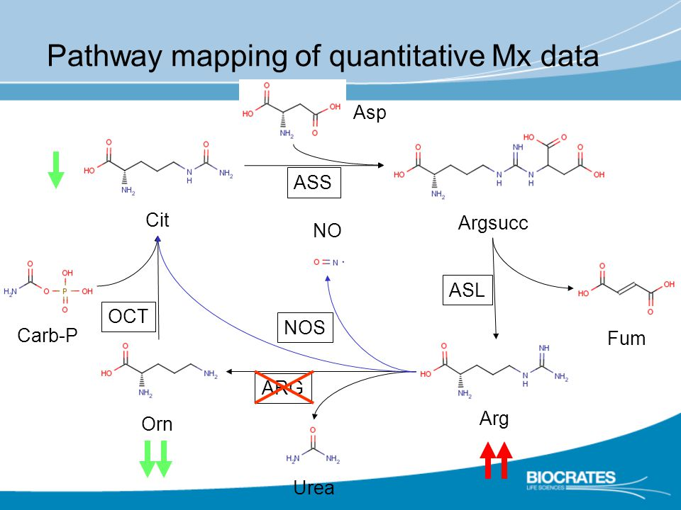 Pathway mapping of quantitative Mx data Cit Arg Orn Argsucc Fum Urea Asp Carb-P NO NOS ASL ASS ARG OCT