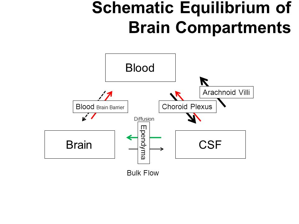 Blood BrainCSF Bulk Flow Diffusion Ependyma Blood Brain Barrier Choroid Plexus Arachnoid Villi Schematic Equilibrium of Brain Compartments