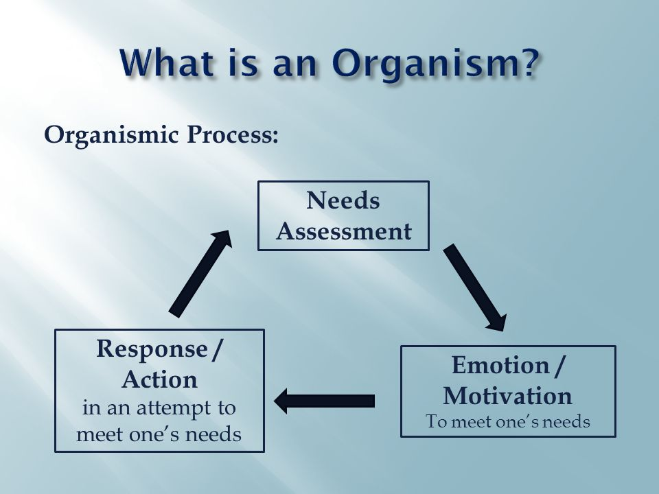 Needs Assessment Emotion / Motivation To meet one's needs Response / Action in an attempt to meet one's needs Organismic Process: