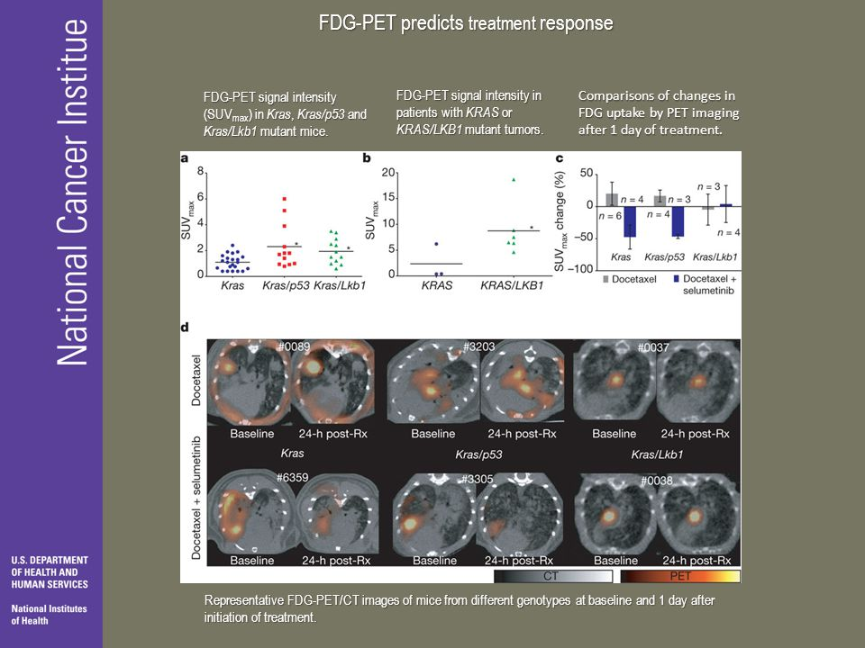 FDG-PET predicts treatment response FDG-PET signal intensity (SUV max ) in Kras, Kras/p53 and Kras/Lkb1 mutant mice.