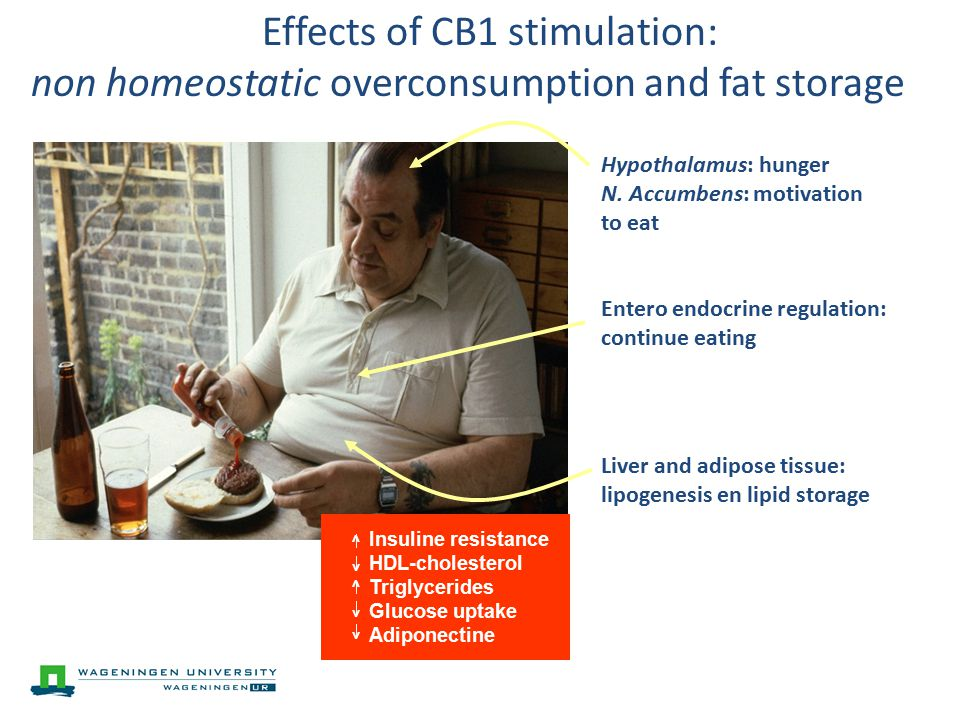 Effects of CB1 stimulation: non homeostatic overconsumption and fat storage Hypothalamus: hunger N.