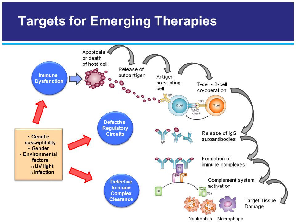 Targets for Emerging Therapies Immune Dysfunction Immune Dysfunction Genetic susceptibility Gender Environmental factors o UV light o Infection Genetic susceptibility Gender Environmental factors o UV light o Infection Defective Regulatory Circuits Defective Regulatory Circuits Defective Immune Complex Clearance Defective Immune Complex Clearance