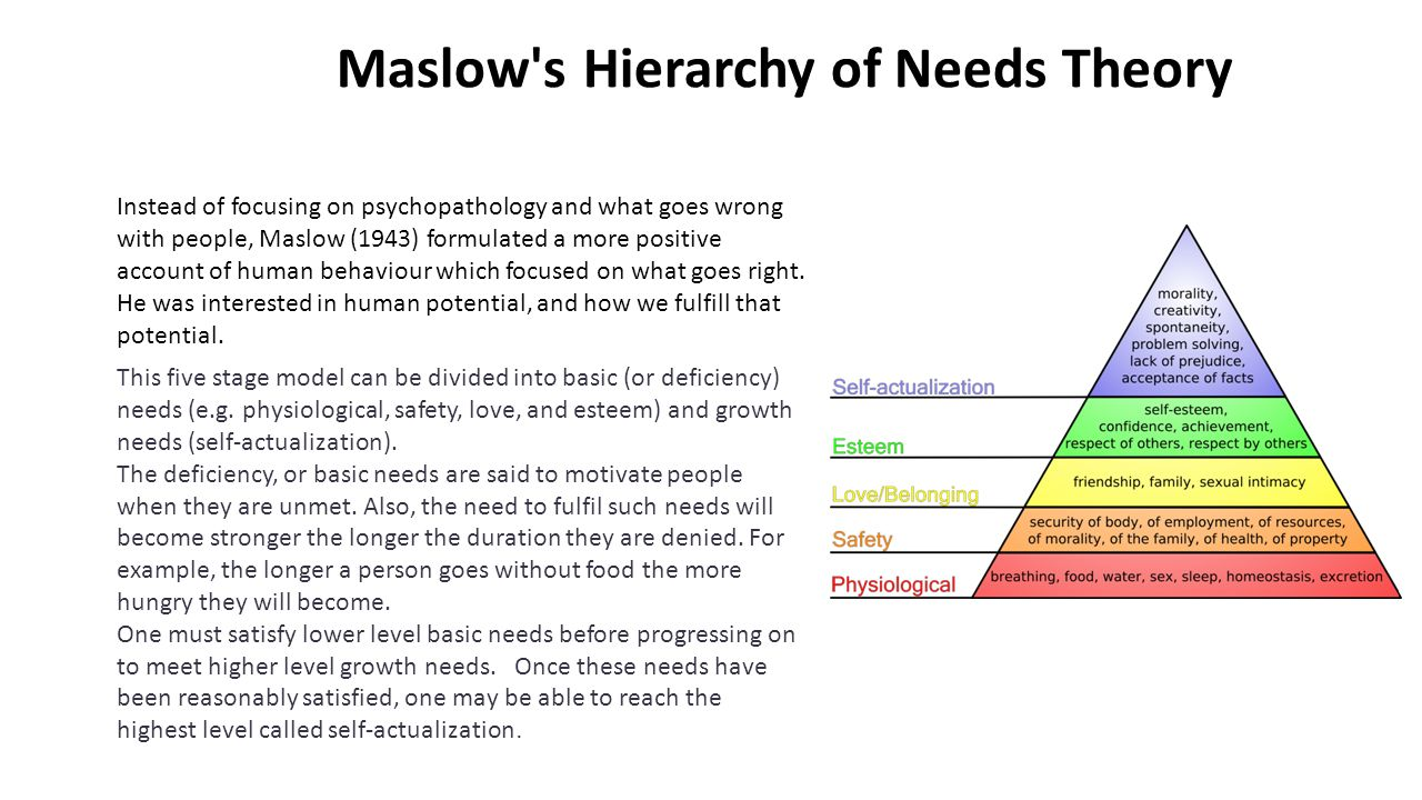 Maslow's Hierarchy of Needs Theory Instead of focusing on psychopathology and what goes wrong with people, Maslow (1943) formulated a more positive ac