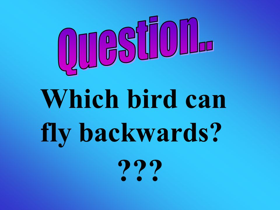 Which bird can fly backwards? ???