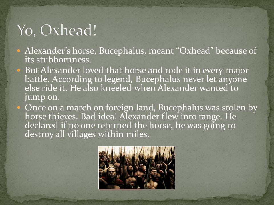 Alexander's horse, Bucephalus, meant Oxhead because of its stubbornness.