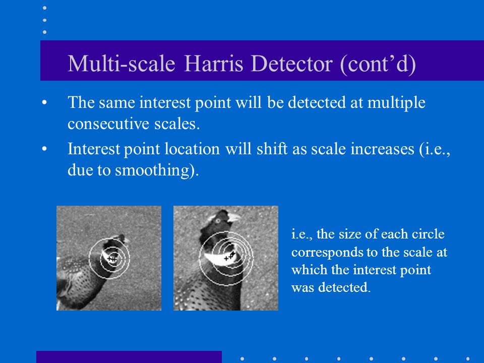 Multi-scale Harris Detector (cont'd) The same interest point will be detected at multiple consecutive scales. Interest point location will shift as sc
