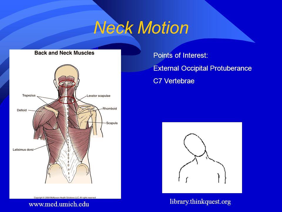 Neck Motion www.med.umich.edu library.thinkquest.org Points of Interest: External Occipital Protuberance C7 Vertebrae