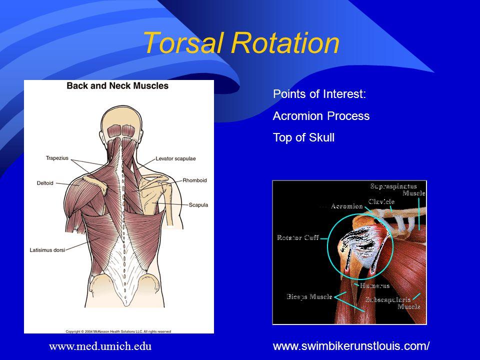 Torsal Rotation www.med.umich.edu Points of Interest: Acromion Process Top of Skull www.swimbikerunstlouis.com/