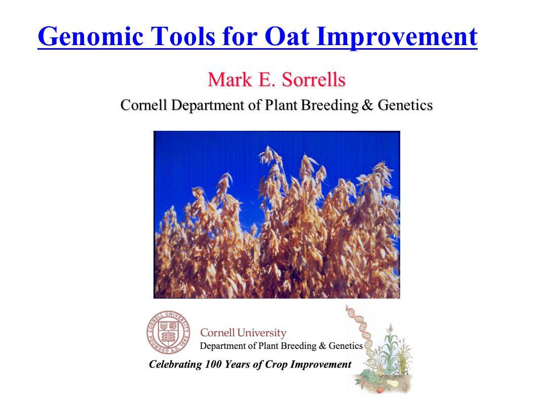 Mark E. Sorrells Cornell Department of Plant Breeding & Genetics Genomic Tools for Oat Improvement